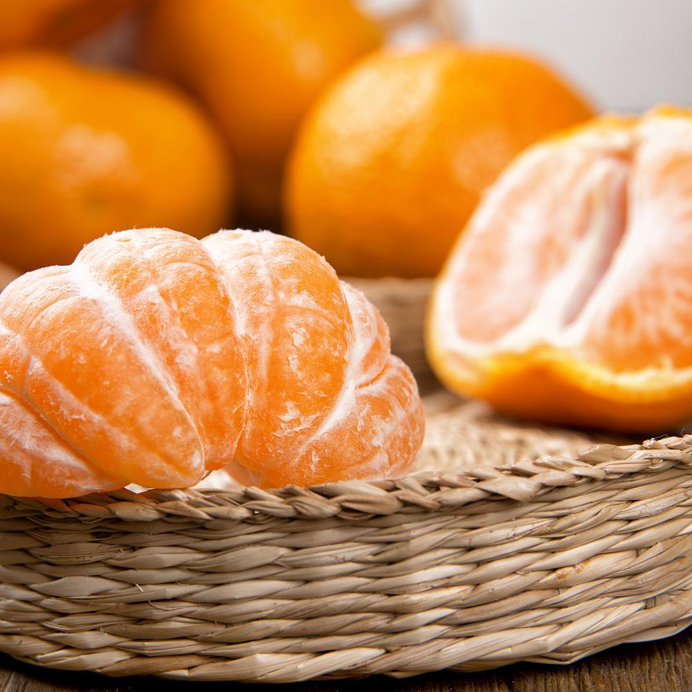 Tangerine Citrus Tree -  Owari Satsuma - 1 Plant