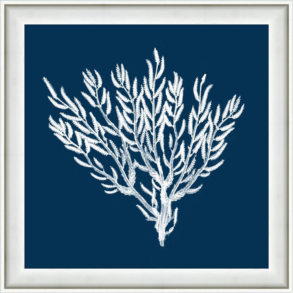 Melissa van hise 18 in x 18 in navy coral ii framed giclee print