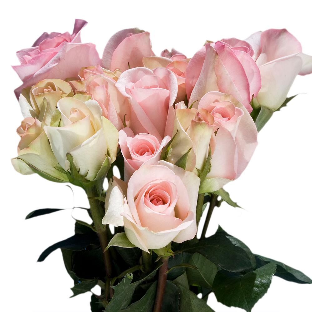 Globalrose Fresh Pastel Color Roses 100 Stems