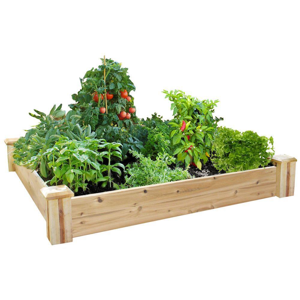 Greenes Fence 4 ft. x 4 ft. x 7 in. Cedar Raised Garden Kit (2-Pack)