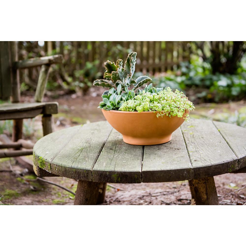 12 in. Terra Cotta Clay Dish Garden Planter