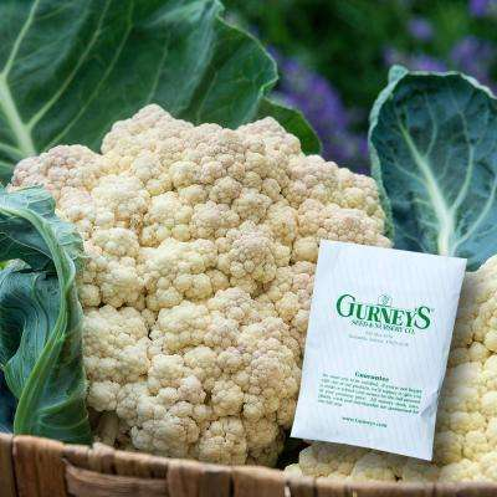 Cauliflower Snow Crown Hybrid Seed (75-Pack)