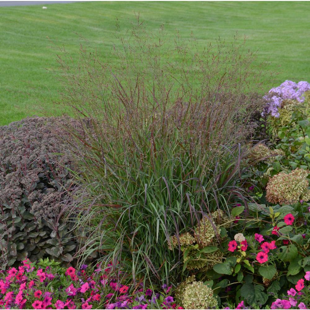 Flowering Perennial - Assorted Mix - Perennials - Garden Plants ...