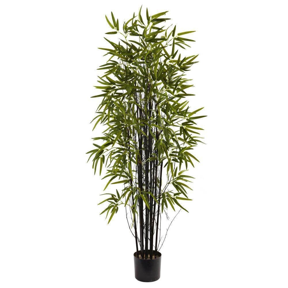 5 ft. Black Bamboo Tree
