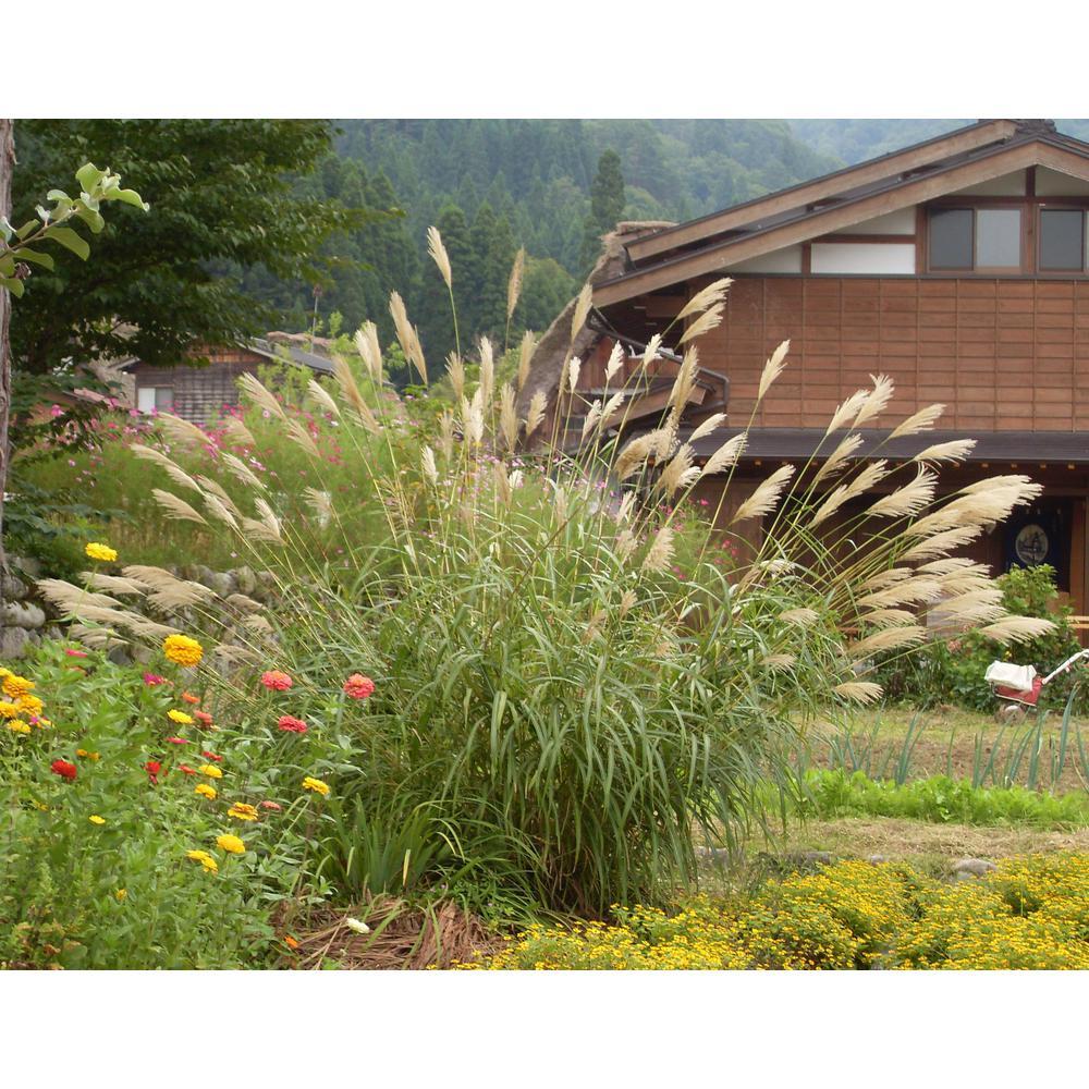 Ornamental Grasses Plants Garden Flowers The Home Depot