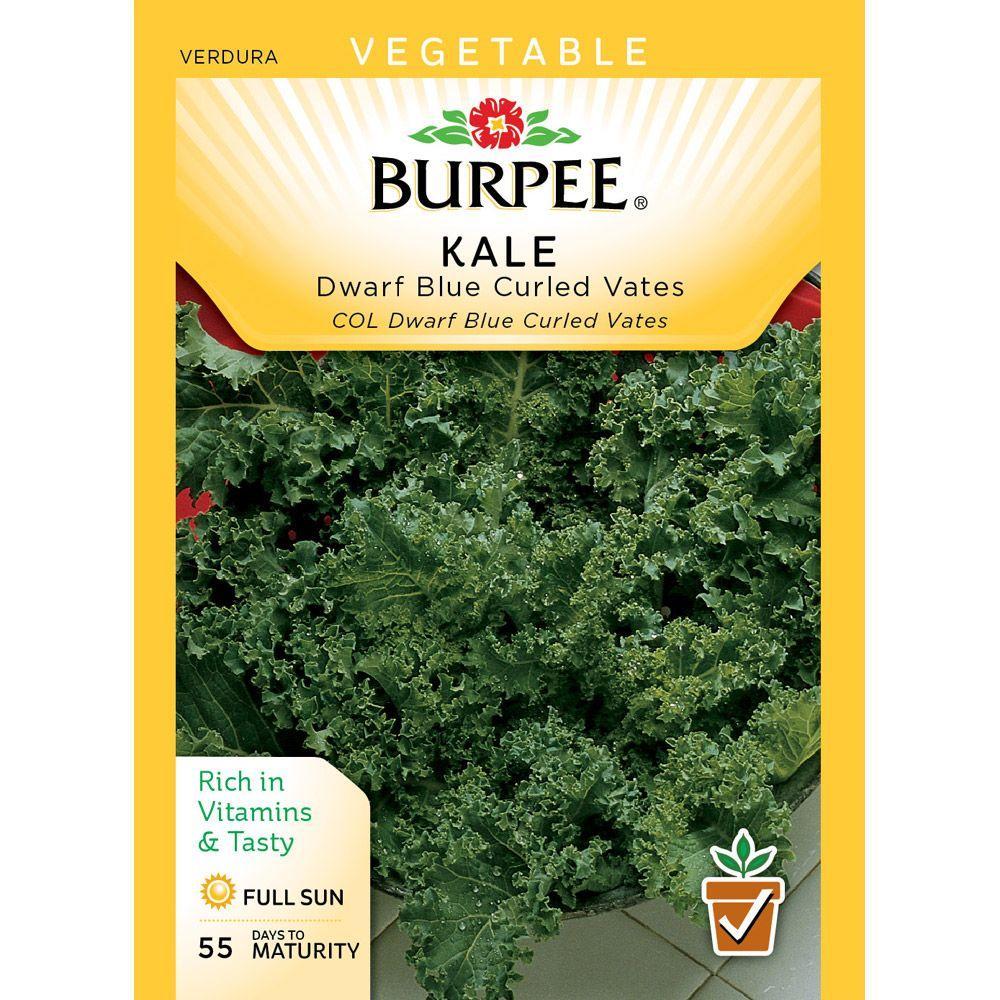 Burpee Kale Dwarf Blue Vates Seed