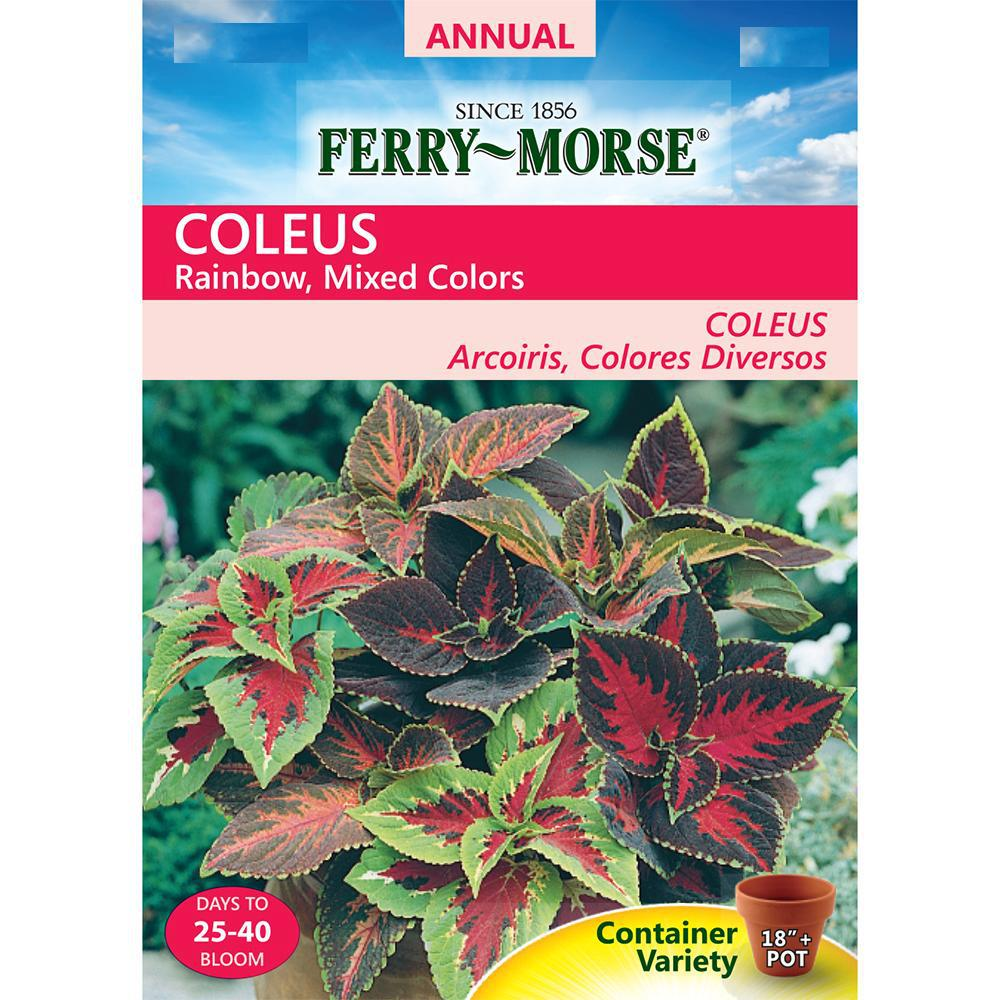 Ferry Morse Coleus Rainbow Seed 1034 The Home Depot