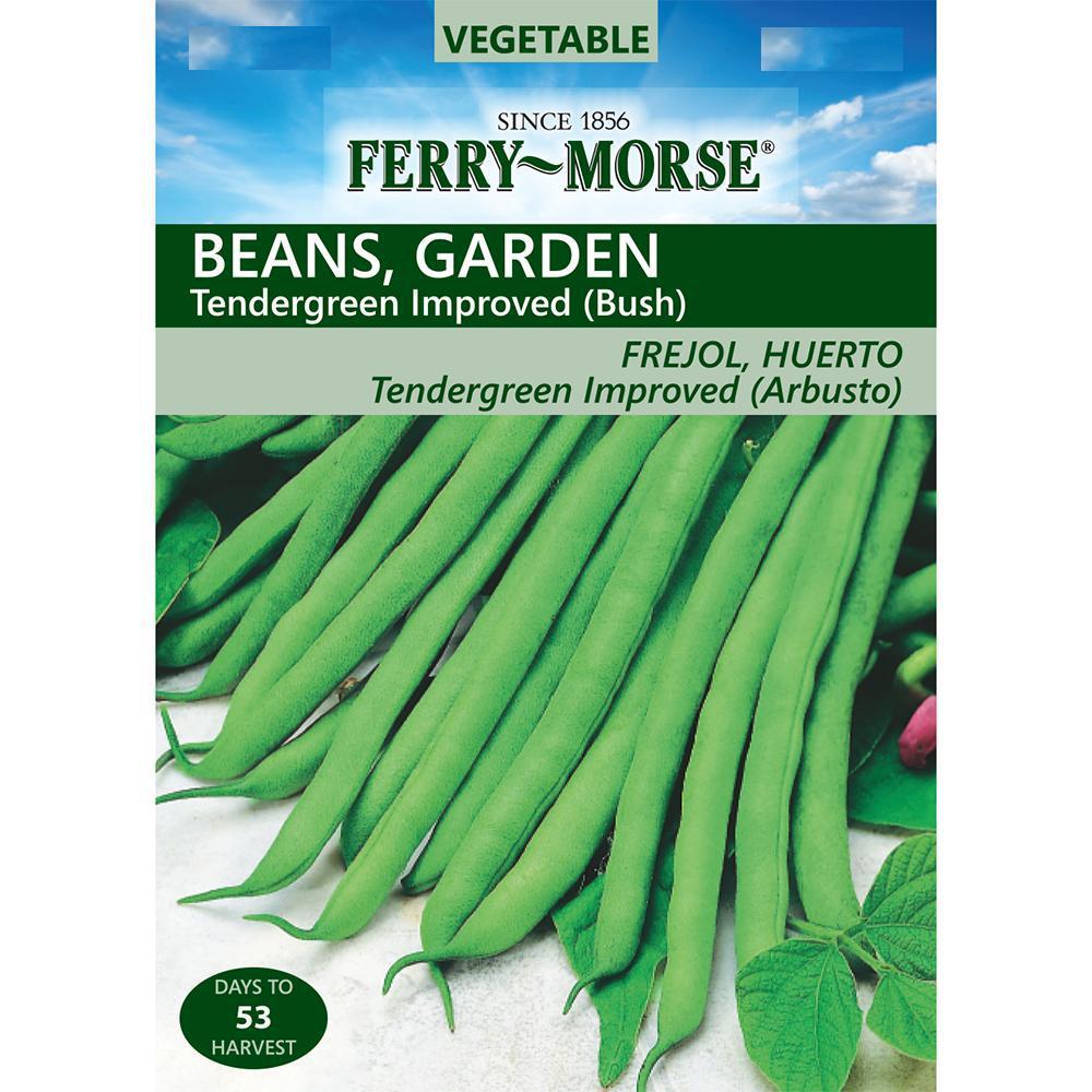 Bean Tendergreen Improved Seed