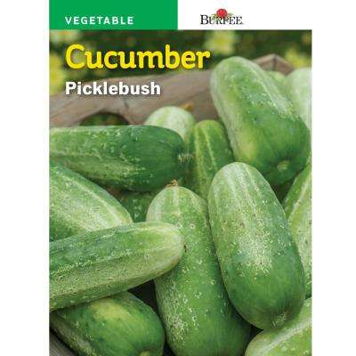 Cucumber Picklebush Seed