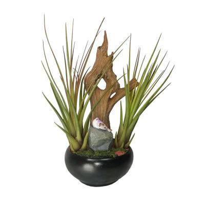 Air Plant Garden in Container
