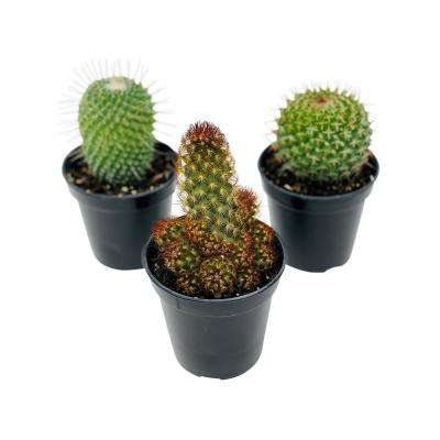 Cactus Plant Mix in 3.5 In Grower's Pot (3-Plants)