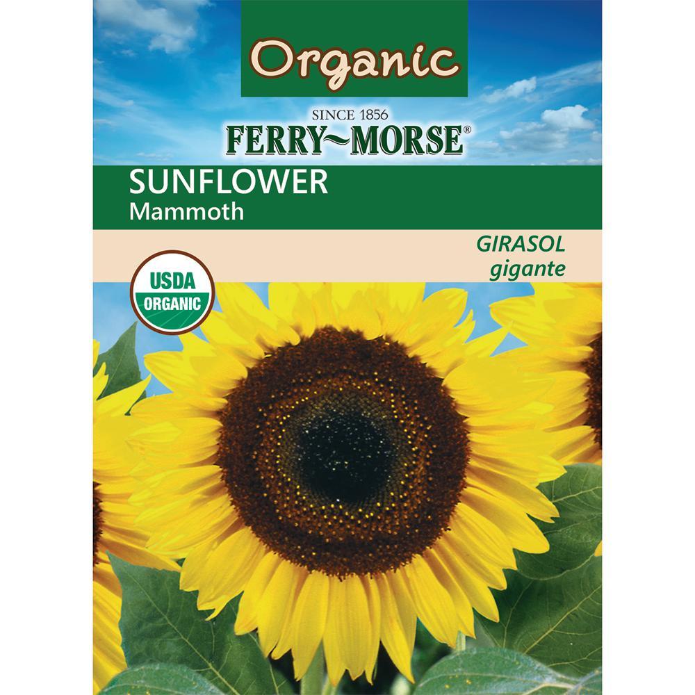 Sunflower Mammoth Organic Seed