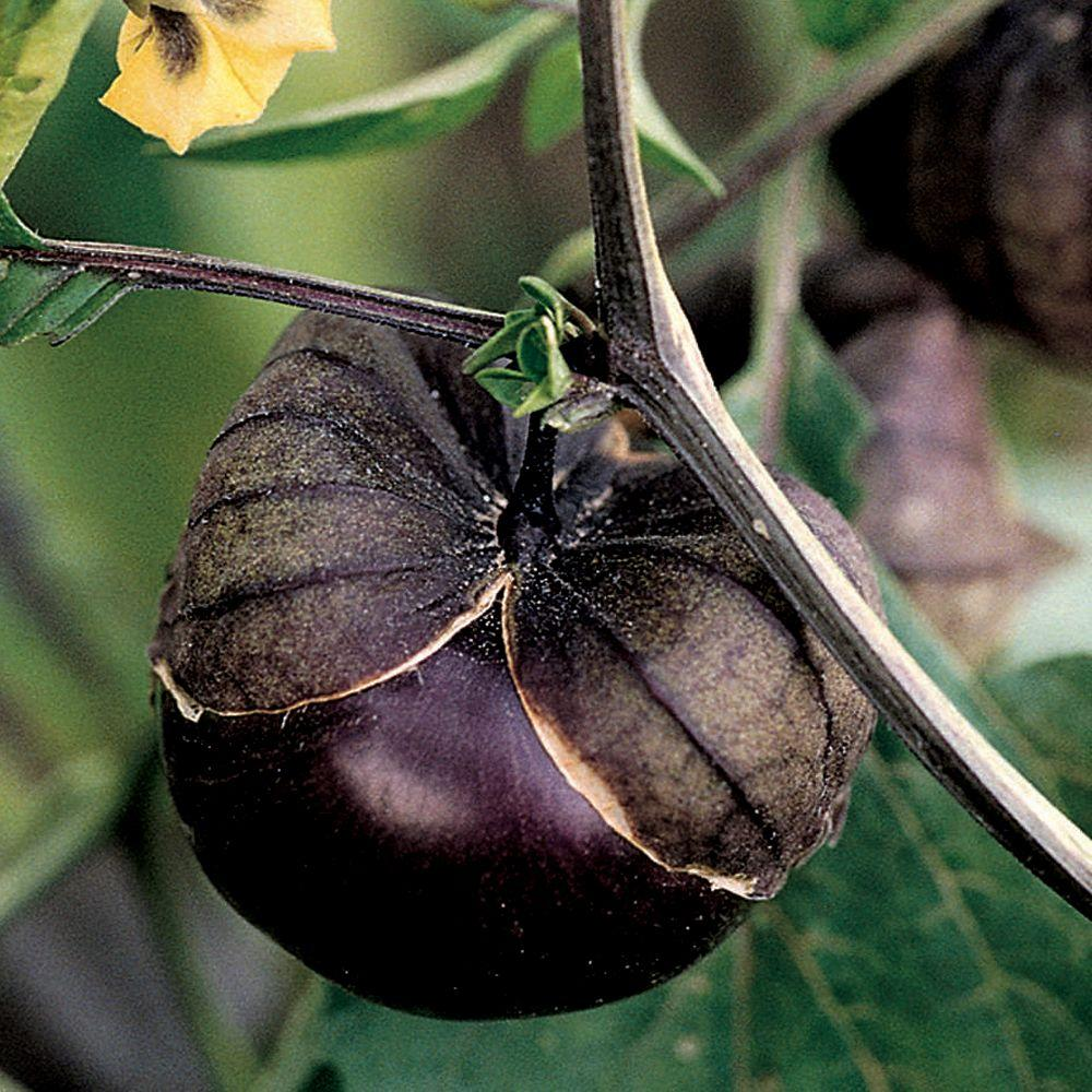 Tomatillo, Purple De Milpa