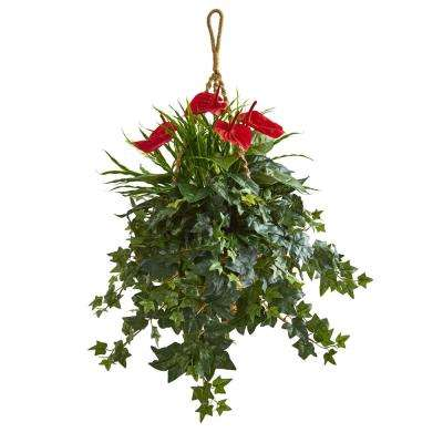 31 in. Indoor Mixed Anthurium Artificial Plant in Hanging Basket