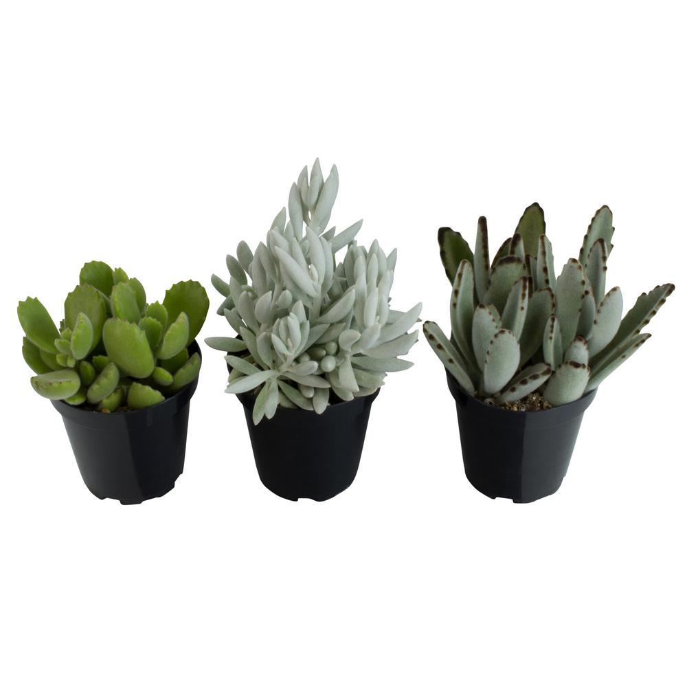 9 cm Pettable Plants Plant (3-Pack)
