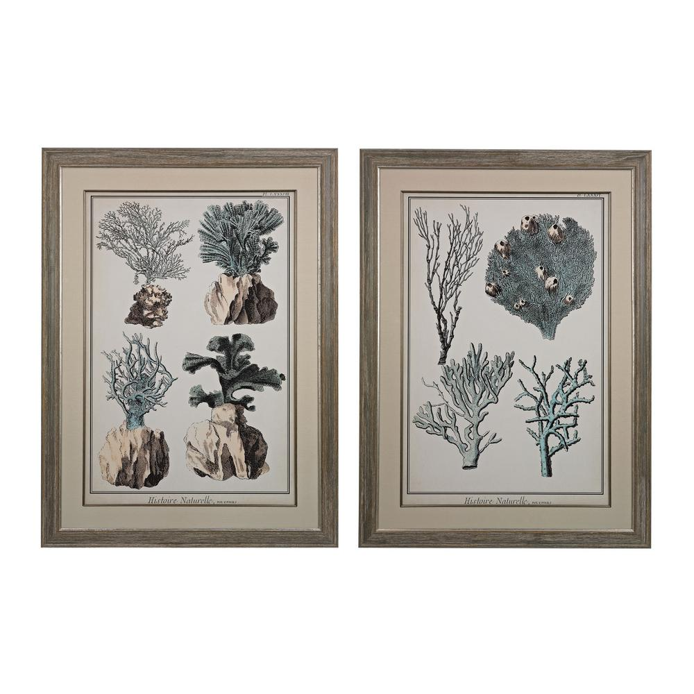 Oversized Coral Species Framed Giclee