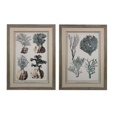 "45 in. x 33 in. ""Oversized Coral Species"" Framed Giclee under Glass Wall Art (Set of 2)"