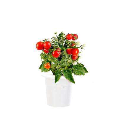 Mini Tomato Refill for Smart Herb Garden (3-Pack)