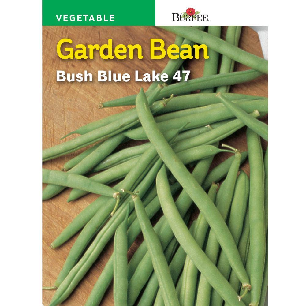 recipe: bush bean seeds home depot [10]