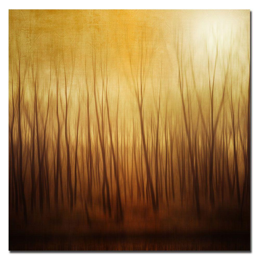 14 in. x 14 in. Ghost Forest Canvas Art-DISCONTINUED
