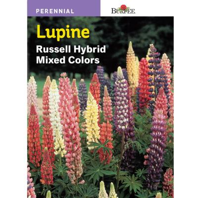 Lupine Russell Hybrid Mix