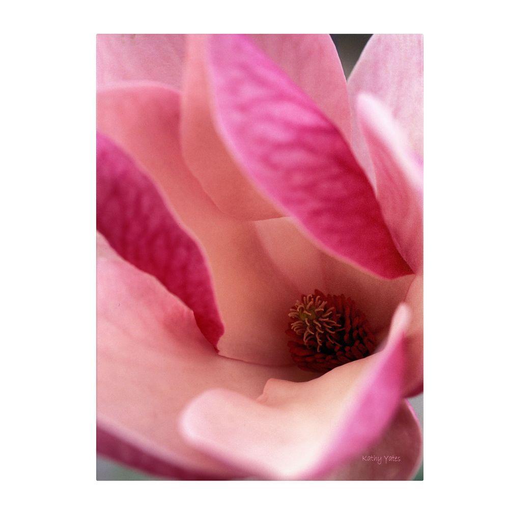 Trademark Fine Art 14 in. x 19 in. Tulip Magnolia Blossom Canvas Art