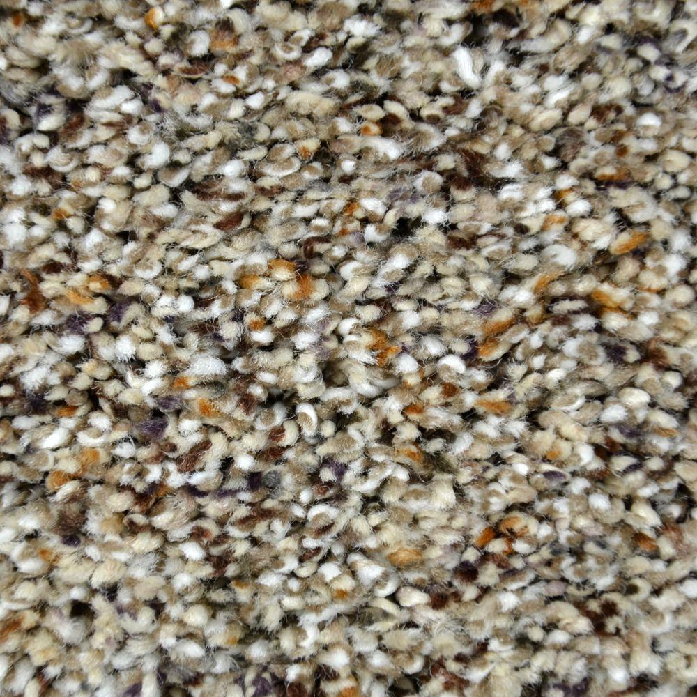 Carpet Sample   Lavish Image I   Color Camden Texture 8 In. X 8 In