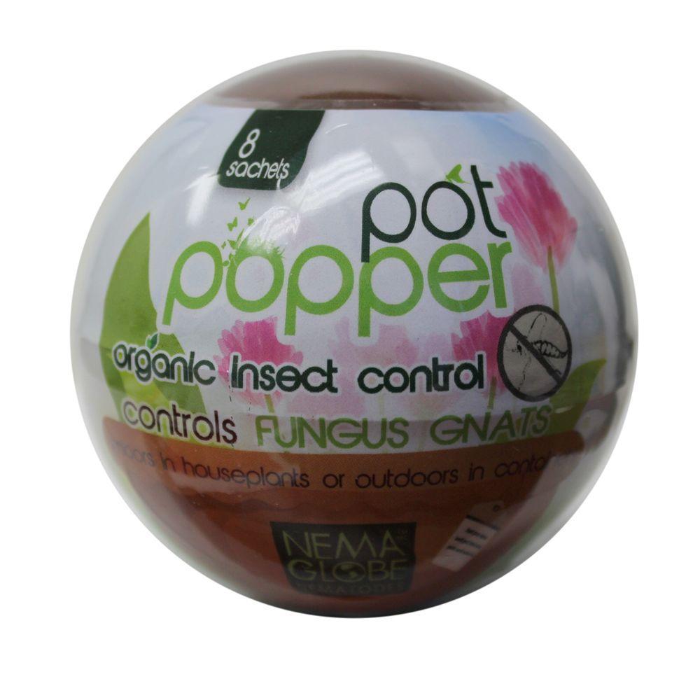 Beneficial Nematode Fungus Gnat Control for Indoor Plants