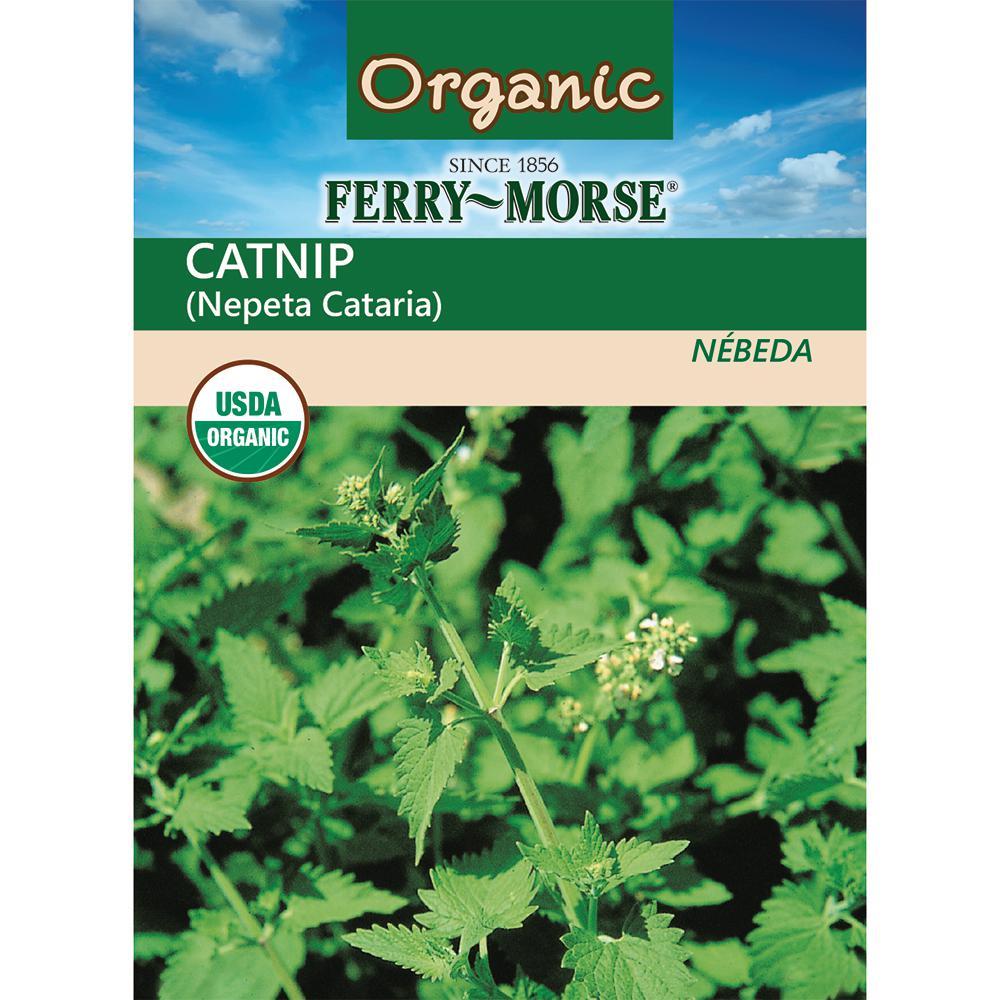 Catnip Organic Seed