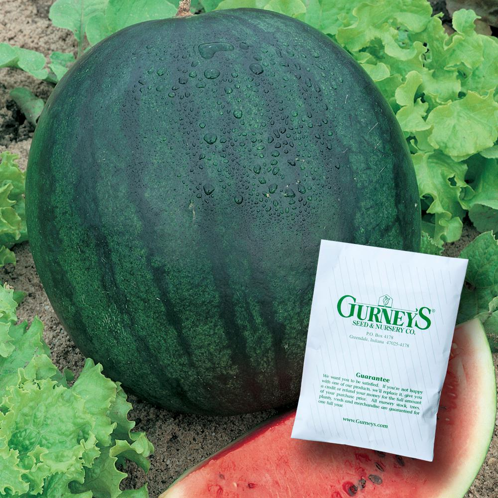 Gurney's Watermelon Sugar Baby (30 Seed Packet)