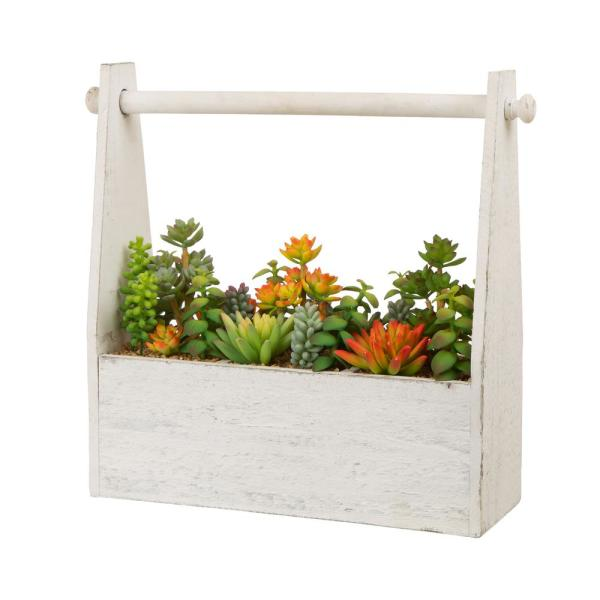 13.75 in. H Succulent Plants in Handled Wooden Box