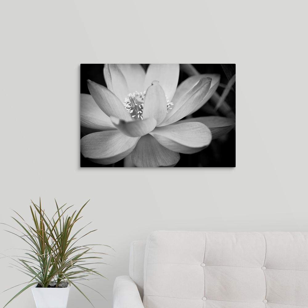 Greatbigcanvas Black And White Flower Ii By Dream On Photography