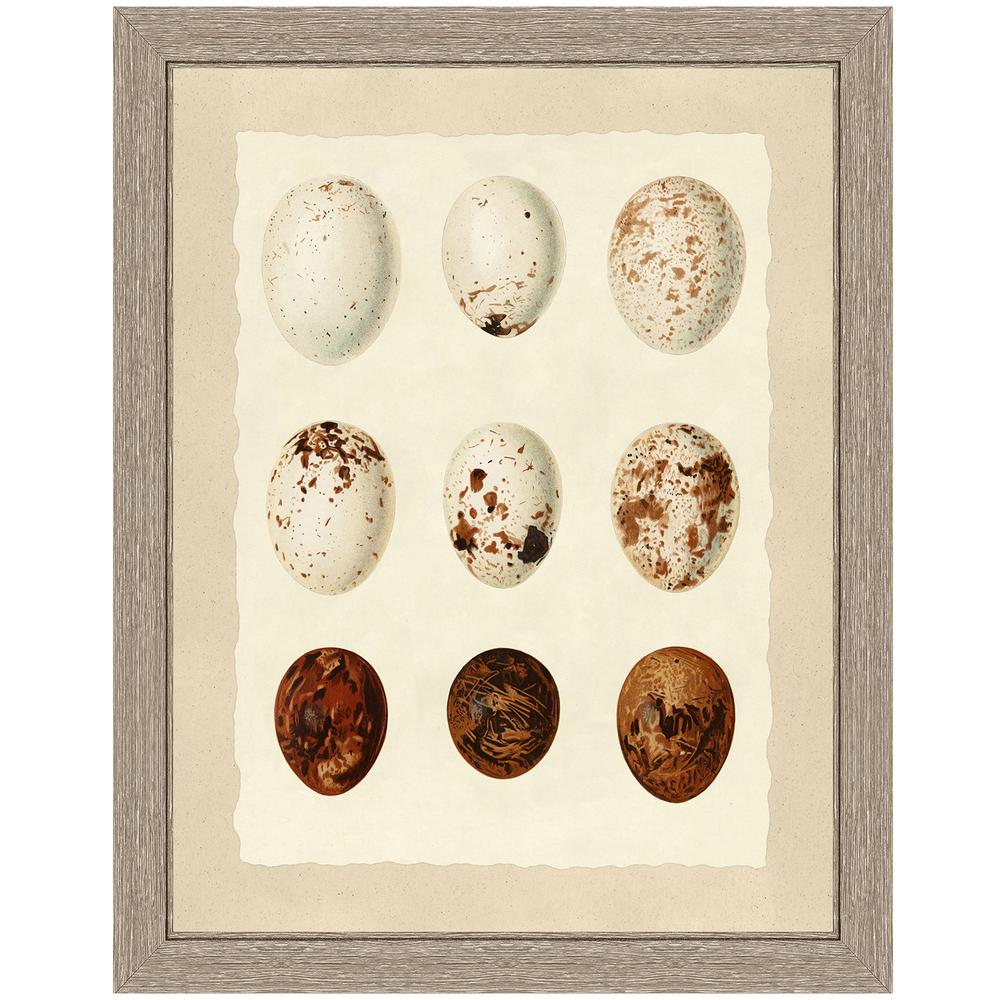 Vintage Print Gallery Birds' eggs IFramed Archival Paper Wall Art (24 in. x 28 in. in full size), Beige was $167.56 now $106.59 (36.0% off)