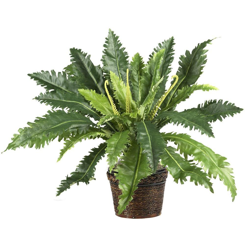 22 in. Marginatum Silk Plant with Wicker Basket