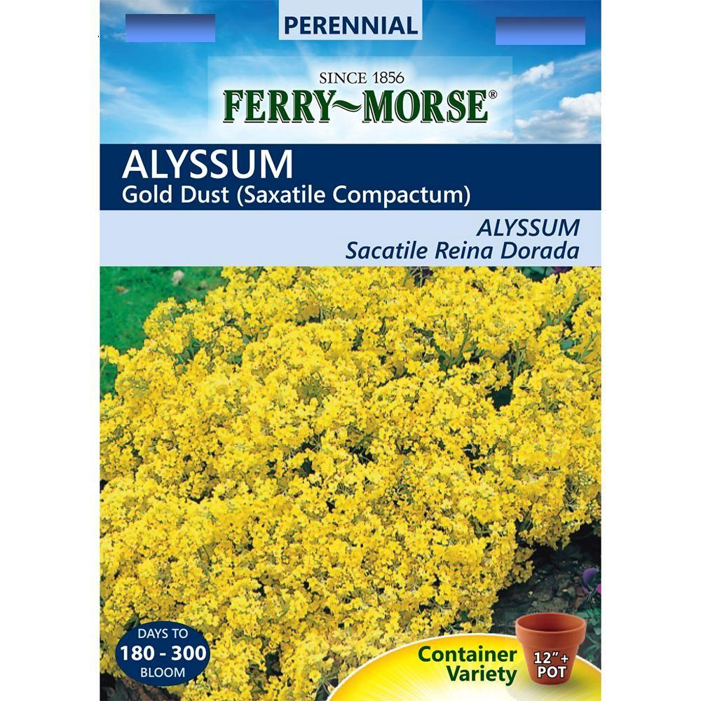 Alyssum Gold Dust Seed