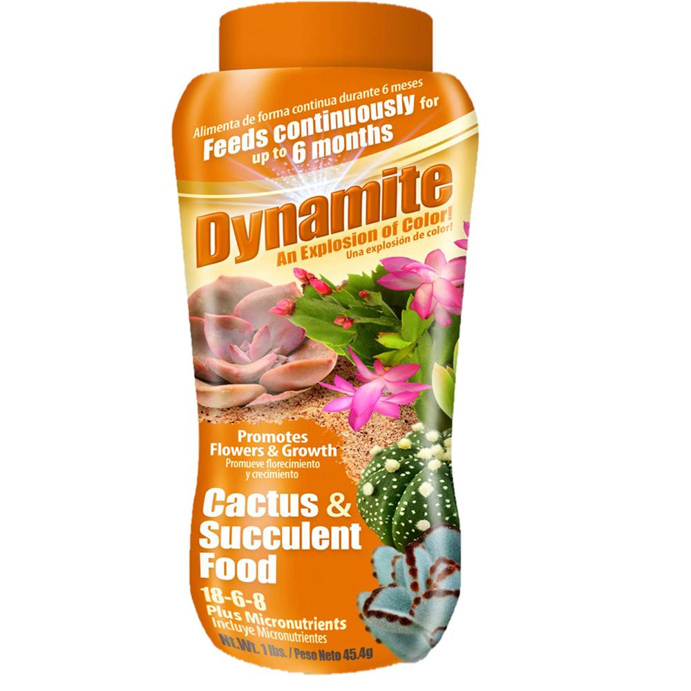 Dynamite Cactus Succulent Food 18 6 8 82170 The Home Depot