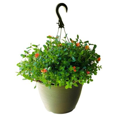 1.8 Gal. Purslane Plant Orange Flowers in 11 In. Hanging Basket