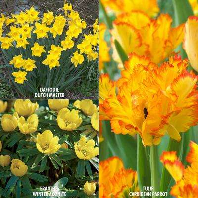 Yellow fall flower bulbs garden plants flowers the home depot color your garden yellow bulbs collection set of 73 mightylinksfo