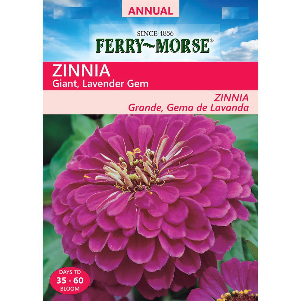 Ferry Morse Zinnia Lavender Gem Giant Double Flowered Seed 4140