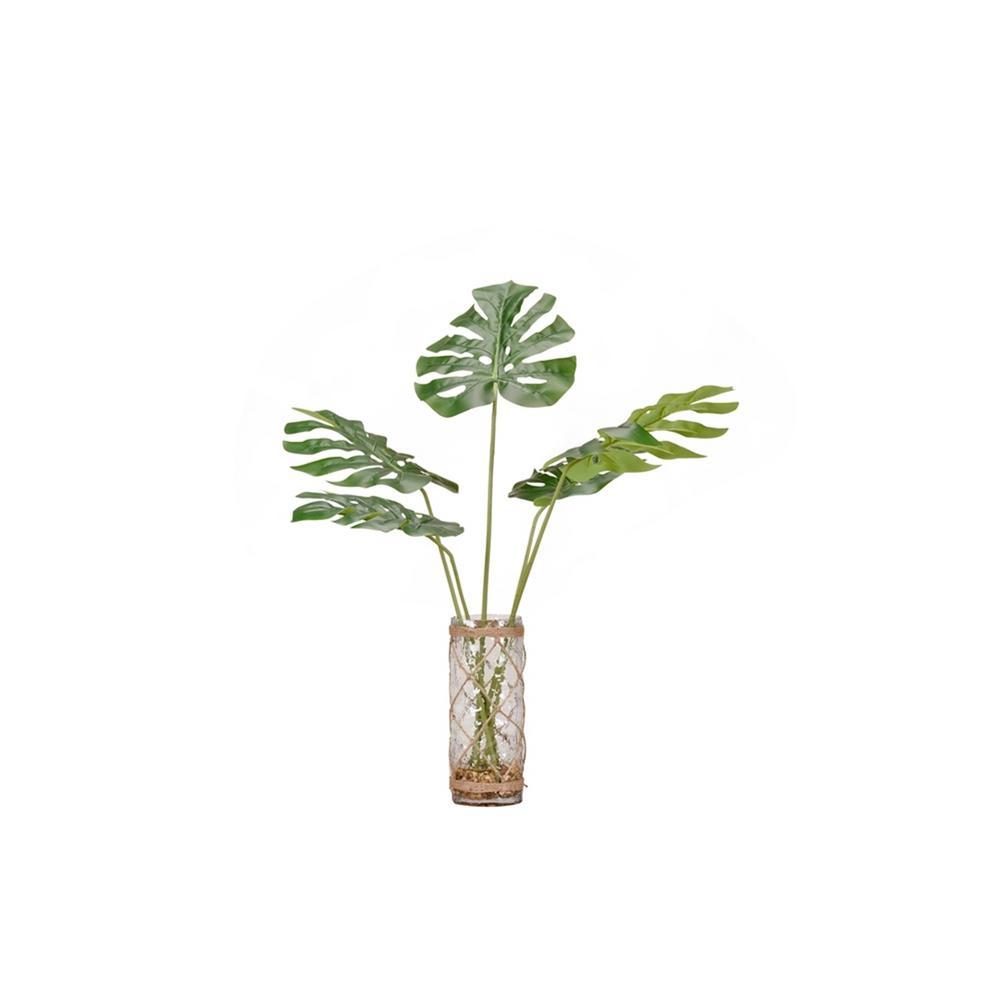 Indoor Round Split Leaf Philo in Glass Vase