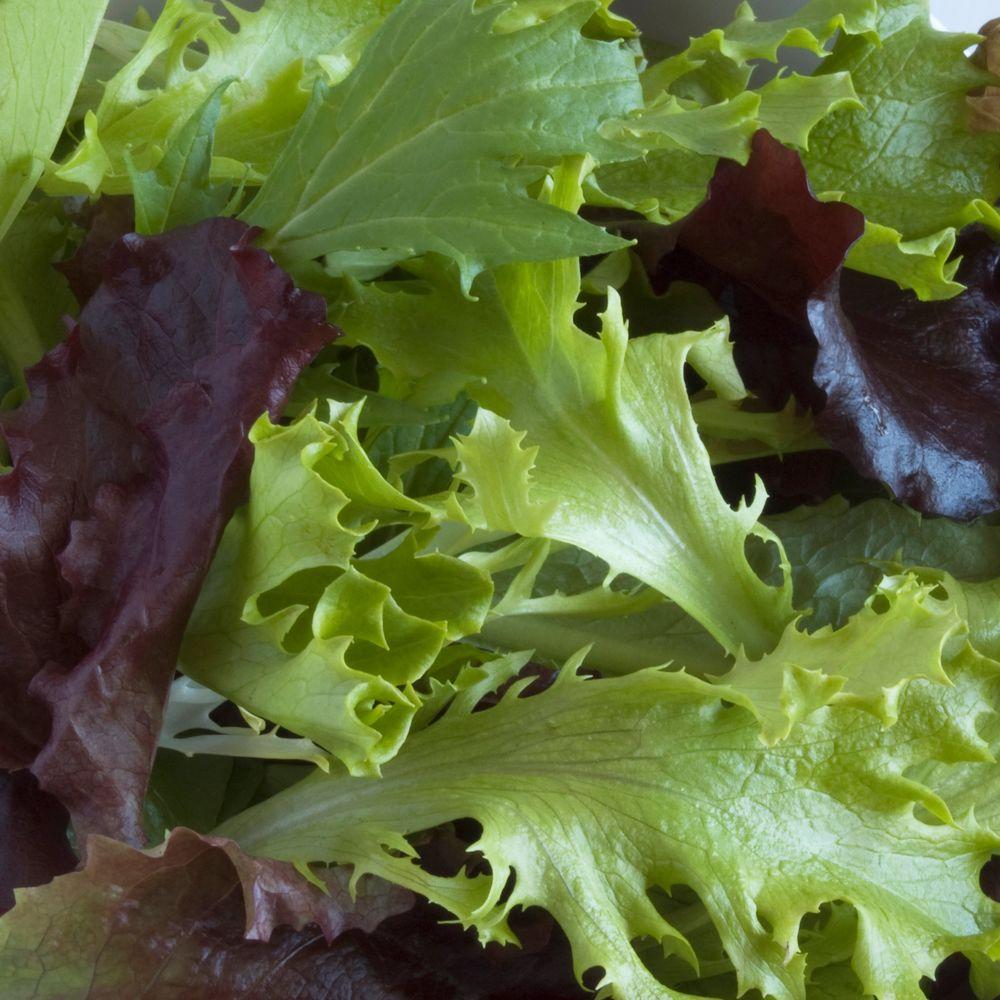 lettuce plant vegetable plants edible garden the home depot