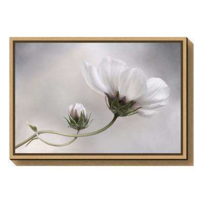 """""""Simply Cosmos"""" by Mandy Disher Framed Canvas Wall Art"""