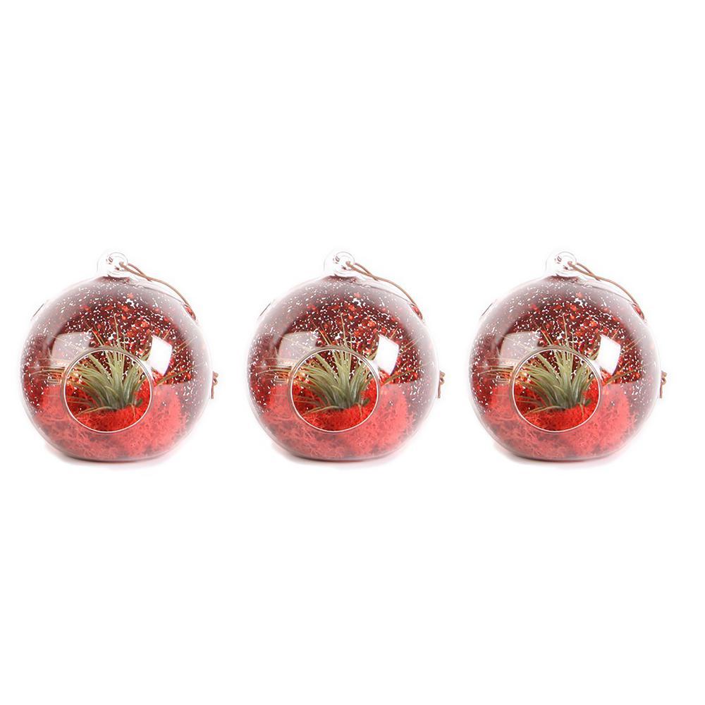 Costa Farms Christmas Globe Airplant Terrarium Ornaments (3-Pack)