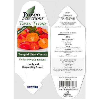 4.25 in. Grande Proven Selections Sungold Cherry Tomato Live Plant Vegetable (Pack of 4)