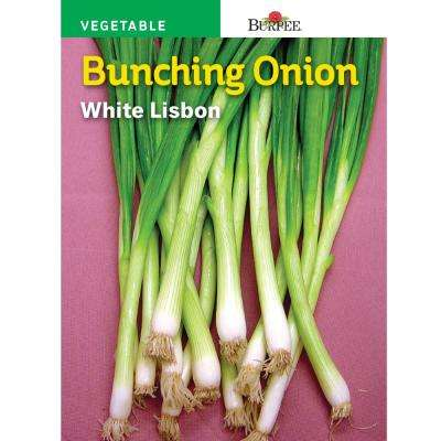 Onion White Lisbon Bunching Seed