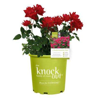 Knock Out 2 Gal. Double Rose Plant with Red Flowers