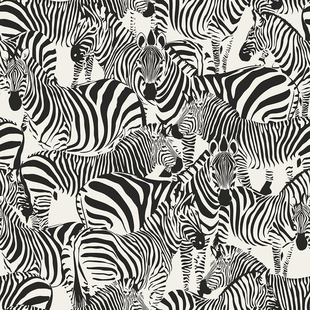 8 in. x 10 in. Jemima Black Zebra Wallpaper Sample ...