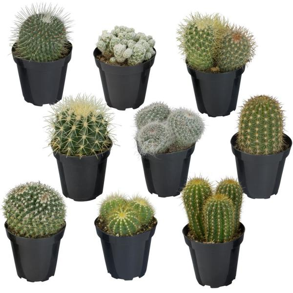 9CM Cactus Collection (9-Pack)