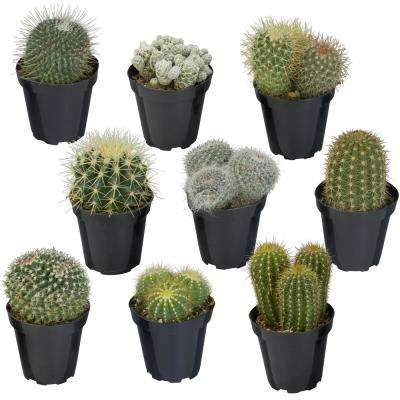 Spring To Fall Succulents Cactus Plants Garden Plants