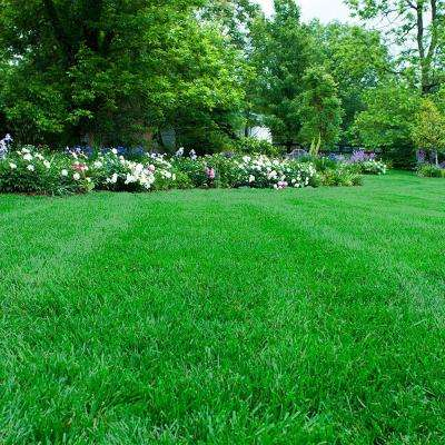 2 lbs. Southern Turf Alive Grass Seed Mixture
